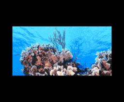 Coral 2 (2004, MSX2, Infinite)